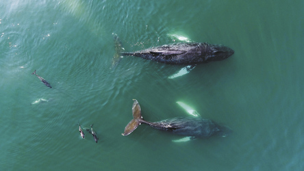 Wale und Delfine vor Kanadas Ostküste, ©Tourism Nova Scotia