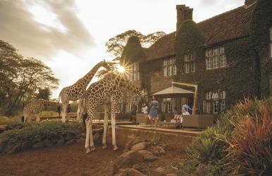 Fütterungszeit zum Sonnenuntergang, ©Giraffe Manor
