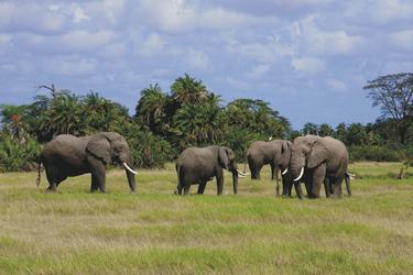Im Amboseli Nationalpark, ©Amboseli Serena Safari Lodge