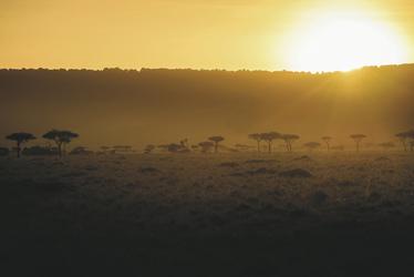 Abendstimmung in der Masai Mara