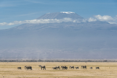 Im Amboseli Nationalpark, ©Riley