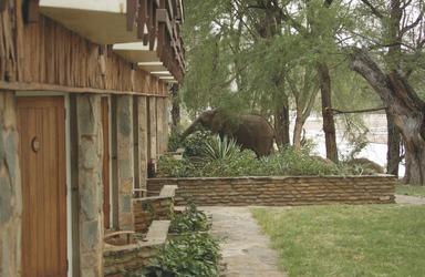 Wilde Tiere besuchen die Lodge