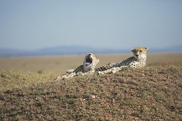 Jäger überblicken ihr Revier, ©Lars Eichapfel, DIAMIR Erlebnisreisen