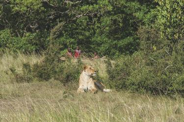 Begegnungen in der Masai Mara, ©© Georgina Goodwin