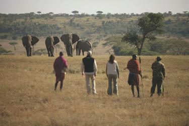 Wandersafari in der Masai Mara