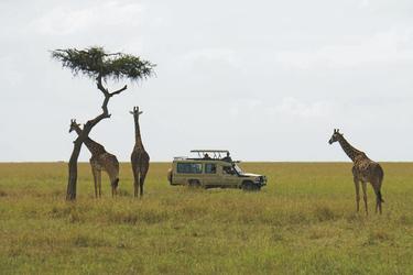 Auf Safari, ©Africa-Experience