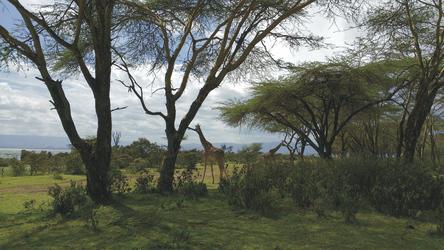 Landschaft am Lake Naivasha, ©Africa-Experience
