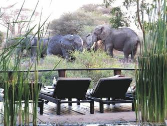 Elefanten ganz nah am Pool