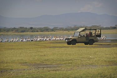 Auf Safari am Lake Nakuru