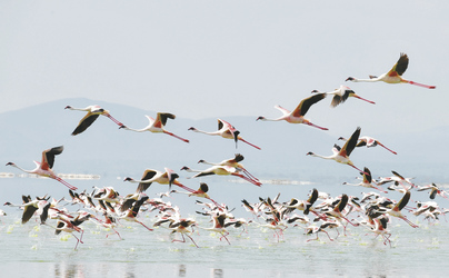 Flamingos am Lake Nakuru, ©UNICEF/FRANK DEJONGH