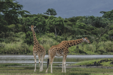 Im Lake Nakuru NP, ©Governors'