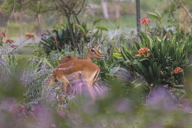 Momente im Garten des Loldia House