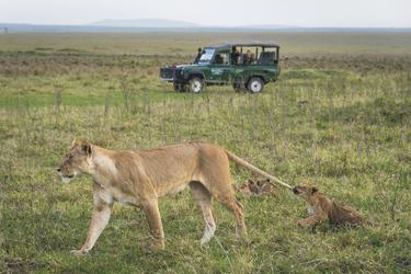 In der Masai Mara, ©Dana Allen www.PhotoSafari-Africa.net