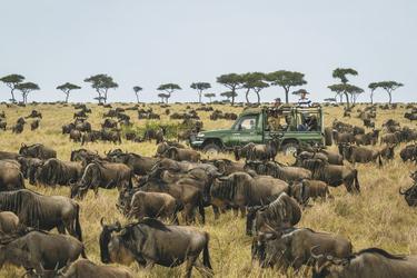 Mitten in der großen Migration, ©Dana Allen www.PhotoSafari-Africa.net