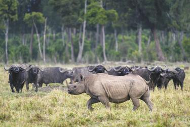 Kolosse in der Masai Mara