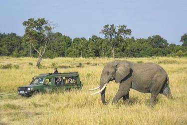 Auf Safari in der Masai Mara