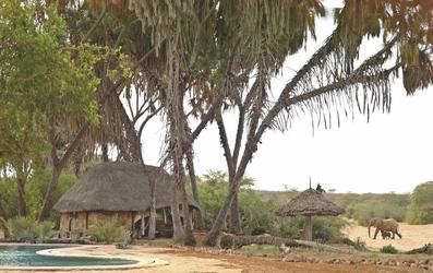 Elefanten im Saruni Rhino Camp