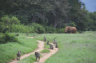 Tierfülle im Tsavo NP
