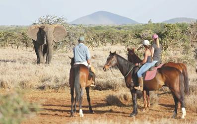Safari mit dem Pferd