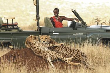 Zwei Geparden entdeckt