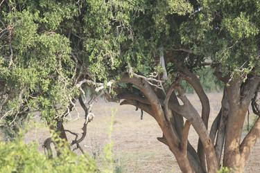 Im Baum entdeckt