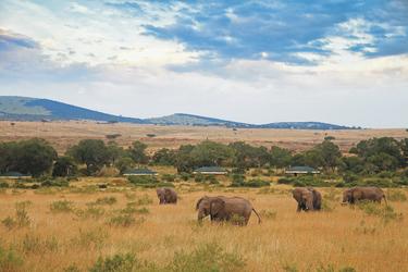Elefanten am Sand River Masai Mara