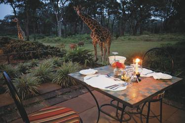 Dinner im Garten, ©Robin Moore