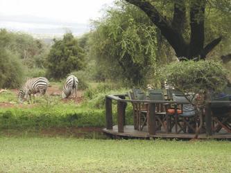 Zebras an der Lodge
