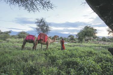 Die Gegend auf dem Kamel erkunden