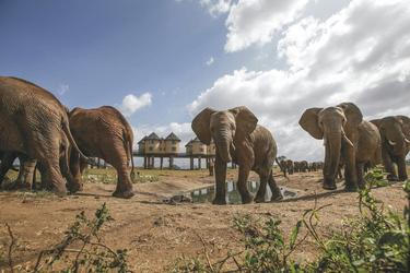 Elefanten kommen gern zum Wasserloch an der Lodge