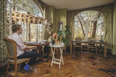 Giraffen am Frühstückstisch