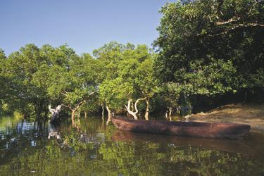 Ausflug in die Mangroven mit dem Einbaum