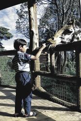 Giraffenzentrum in Nairobi