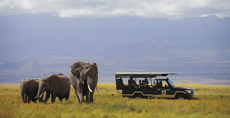 Im Amboseli Nationalpark
