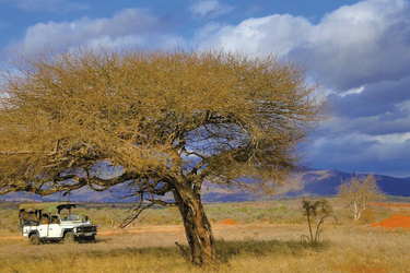 Landschaft im Tsavo