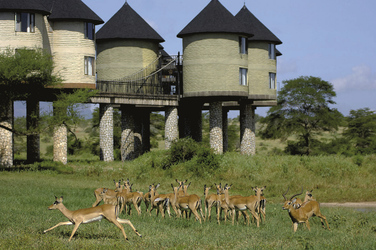 Sarova Saltlick Game Lodge