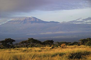 Traumziel Amboseli, ©Olaf Schau, DIAMIR Erlebnisreisen