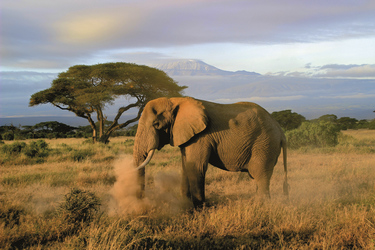 Im Amboseli Nationalpark, ©Olaf Schau, DIAMIR Erlebnisreisen