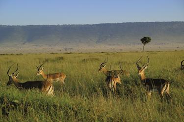 Unterwegs in der Savanne, ©Olaf Schau, DIAMIR Erlebnisreisen