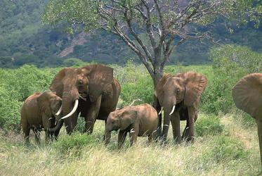 Elefanten gesichtet