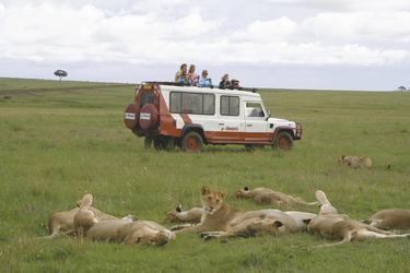 Im Safarifahrzeug