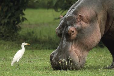Friedliches Tierparadies