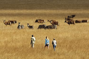 Zu Fuß unterwegs im Nyika Nationalpark