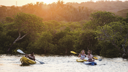 Kanu fahren in den Mangroven