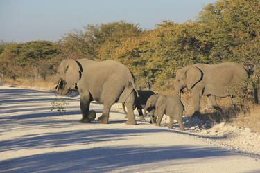 Unterwegs im Etosha Nationalpark