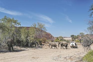Bei den Wüstenelefanten