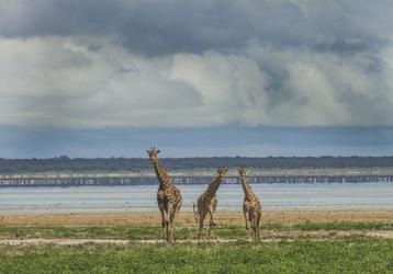 Giraffen und Flamingos an der Etosha Pfanne, ©Ute von Ludwiger
