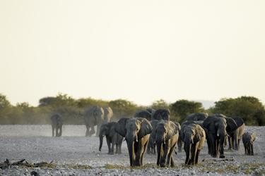 Begegnung mit den Wüstenelefanten
