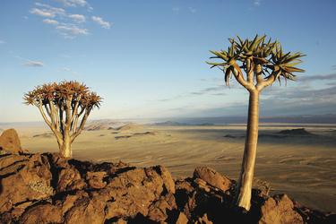 Köcherbäume im Süden Namibias