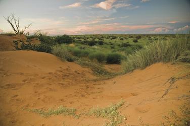 Herrliche Kalaharilandschaft